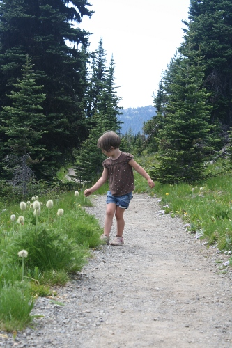 bea in the alpine meadows