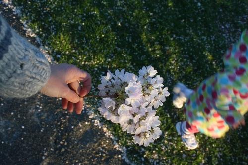 cherry blossom hands