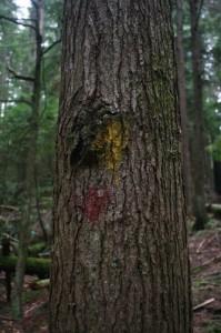 hike marker