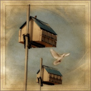 birdhouse and dove