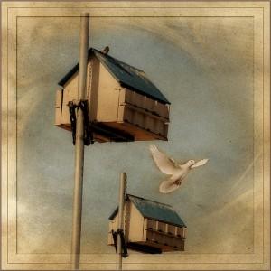 birdhouse and dove