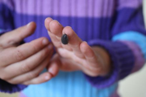 wood bug crawling on fingers