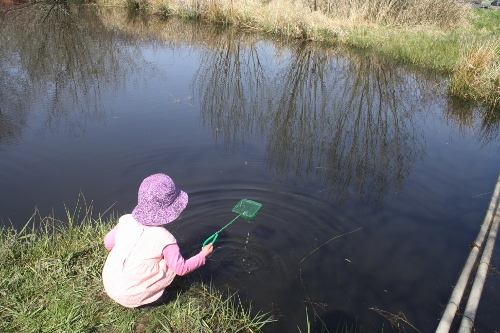 preschool girl using a dipnet at a pond