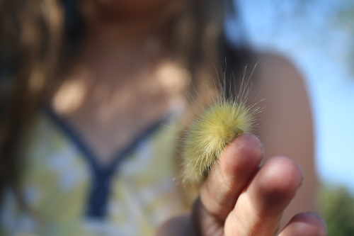 little girl with a fuzzy caterpillar