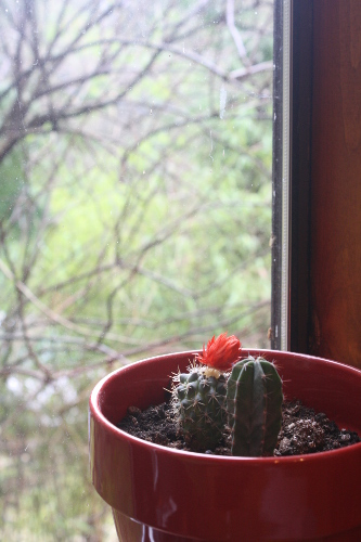 window with cactus