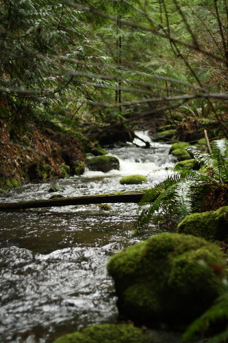 stream and moss covered rocks