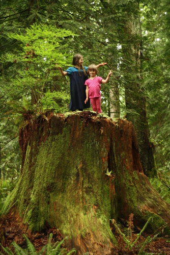 two girls on a huge old growth tree stump