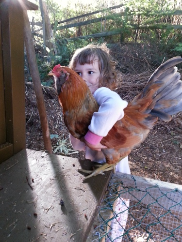 little girl with a rooster