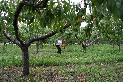 bea_picking_peaches