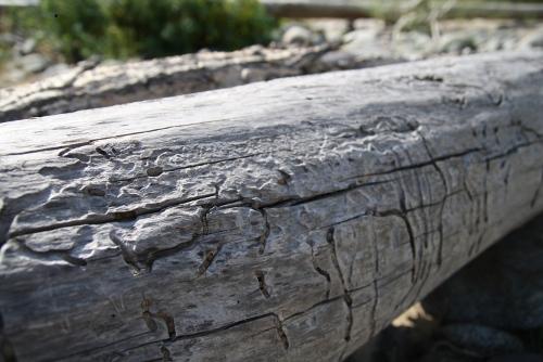 river_driftwood
