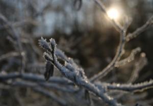 winter sun ice crystals