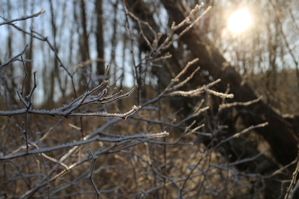 meadow_ice_crystals_branches